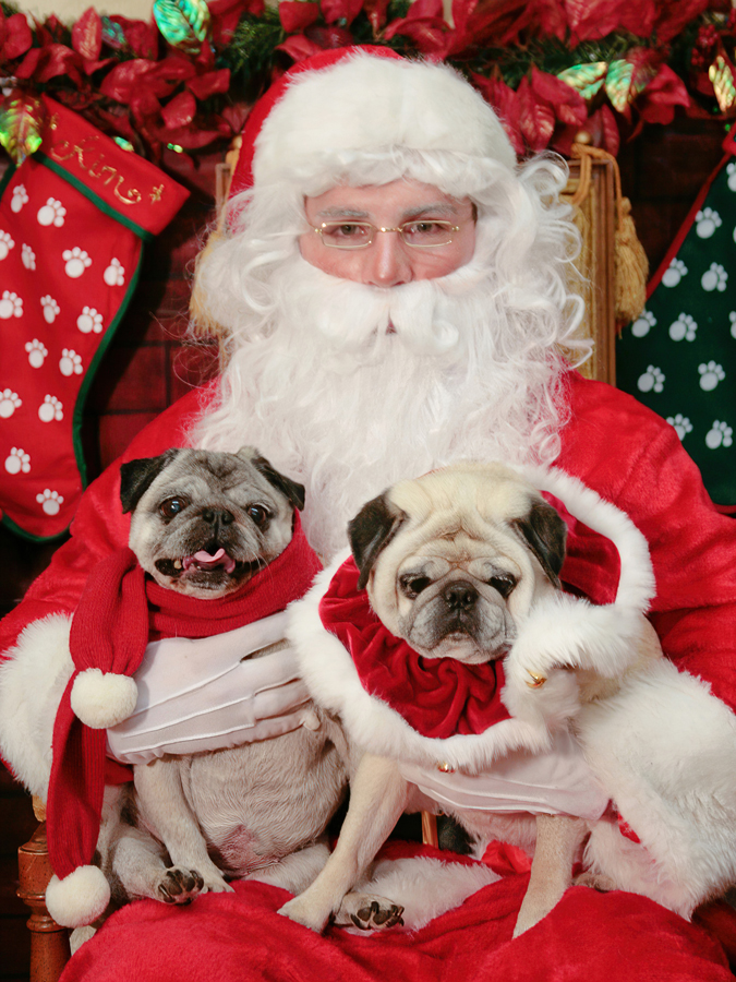 Pet Sessions with Santa